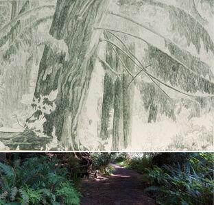 Gabriela Albergaria, 'Redwoods 648 ', 2016-2019