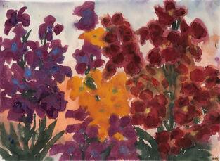 Gelbe, rote und violette Blumen (Sommerblumen)