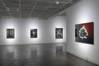 The Night Watch, installation view