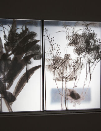 JANET LAURENCE - 'Works from the Kimberly trip', installation view