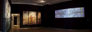Sonia Mehra Chawla: The Embryonic Plant and Otherworlds, installation view