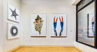 It's A Shore Thing, installation view