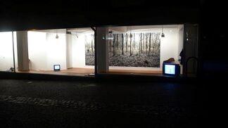 Onochord, installation view
