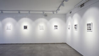 Sergey Onischenko, Make Like a Tree, installation view