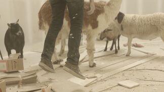 Mateo Tannatt: HORSE, installation view