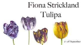 Fiona Strickland: Tulipa, installation view