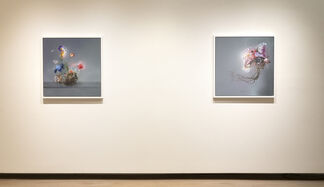 Matthew McConville • Flowers for the Anthropocene, installation view