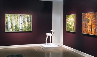 Jeffrey Vaughn, installation view