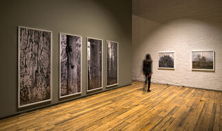 """Williamson Chong, """"Living Wood"""" and """"On Architecture & Structure"""", installation view"""