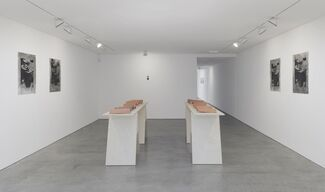 Muscular Notions, installation view