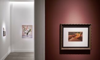 Still Life with a Curtain, installation view