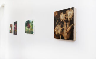 Katrine Claassens | Love Letters to the Muted World, installation view
