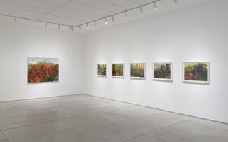 """Kristin Musgnug – """"Low Down and Close Up: Paintings of the Forest Floor"""", installation view"""