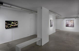 I Own You, installation view