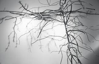 Dalya Luttwak: Roots: Nature's Hidden Beauty, installation view