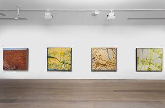JOHN OLSEN - NEW WORKS, installation view