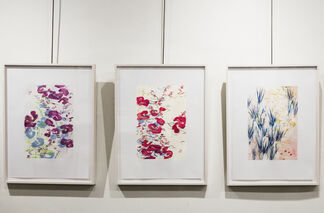 John Thompson: Symphony of Nature, installation view