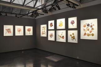 Irving Penn: Flowers, installation view