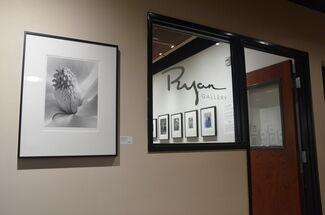 Imogen Cunningham: Through Her Lens, installation view