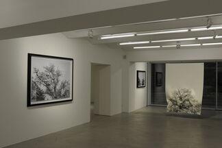 Hubertus Hamm, installation view