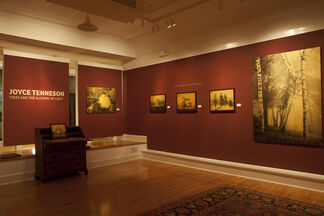 Joyce Tenneson   Trees and the Alchemy of Light, installation view