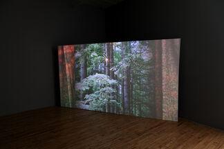 Deborah Mesa-Pelly: Freddie, Bread, Curtains, installation view