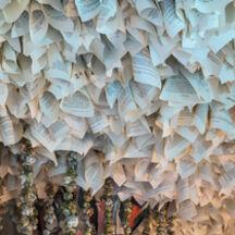 Rachel Marks: Naturae Liber, installation view