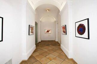 Damien Hirst - Dots • Spins • Butterflies & More, installation view