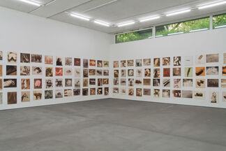 Nude Animal Cigar, installation view