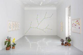 Spencer Finch | Botanica, installation view