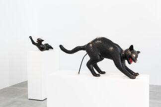 STUDIO JOB: PUSSY CATS, installation view