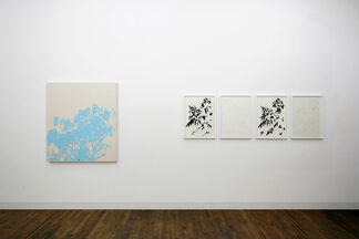 Billy James Joyce, An Interview with a Bear, installation view