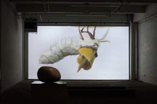 PONY COCOON, installation view