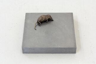Jo Coupe 'All That Fall' / Joseph Beuys 'Wirtschaftswert', installation view