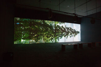 Eija-Liisa Ahtila: Olentoja (Creatures), installation view
