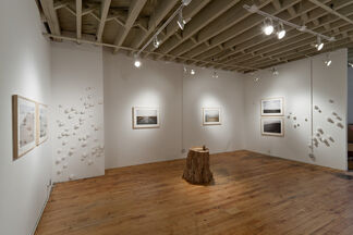 Second Nature, installation view