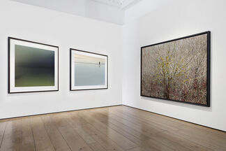 Flowers at Photo London 2020, installation view