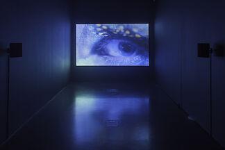 Damir Očko   Dicta, installation view