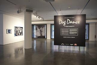 Dog Dance, installation view
