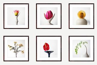 Vivienne Foley - Flower Form Photographs, installation view