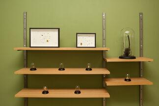 Wunderkammer, installation view