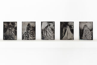 The Worshipper of the Image, installation view