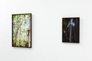 Jungle Road, installation view