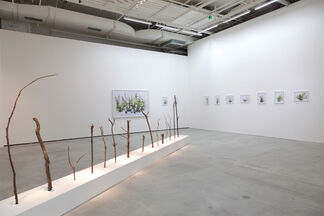 "Wang Yahui "" Near and Far "", installation view"
