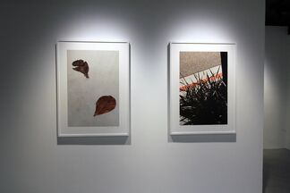 "RALPH GIBSON - ""VERTICAL HORIZON"", installation view"