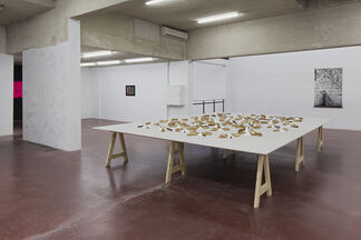 5775 (Part II) by Mircea Cantor, installation view