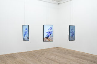 The Bliss of Metamorphing Collapse, installation view