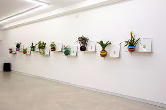 No Fear, Dead or Alive, installation view