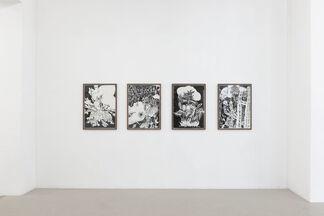 Amorphophallus - Tilo Baumgärtel, Lou Hoyer, Stu Mead, Christoph Ruckhäberle, installation view