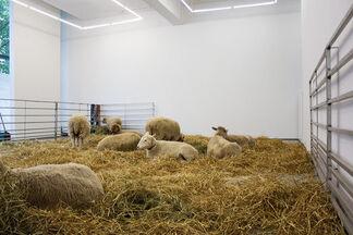"""Santiago Sierra - """"The Flock (El Rebaño)"""", installation view"""